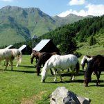 Chevaux dans les Hautes-Pyrénées
