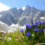 Fleurs dans les montagne des Hautes-Pyrénées